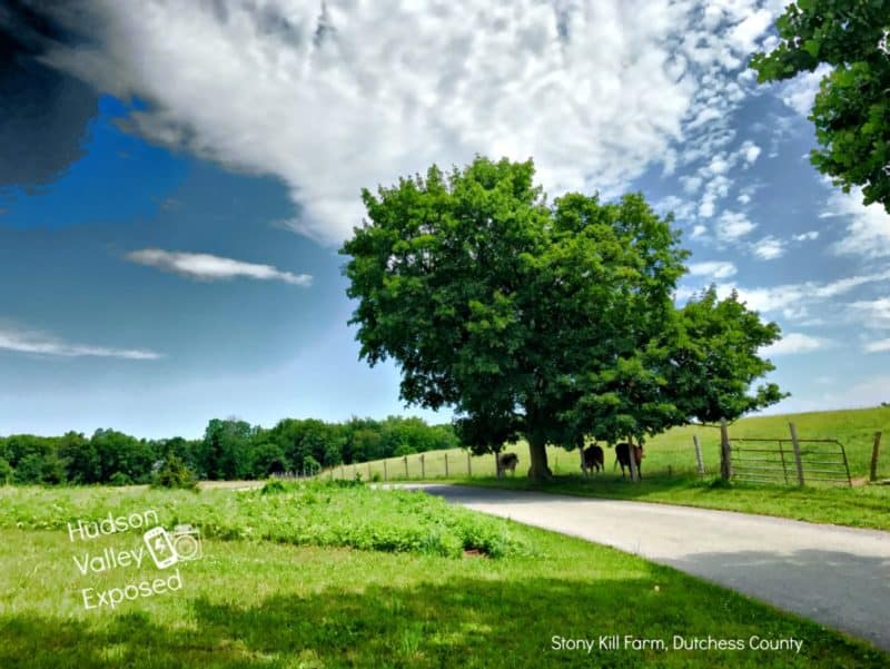 Stony Kill Farm is a free venue in Dutchess County. It offers hiking trails and open bran on the weekends.