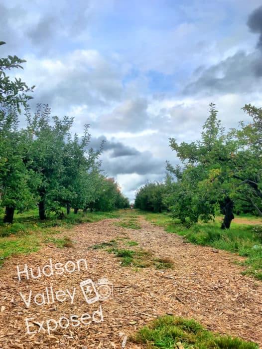 The orchards at Stuarts Fruit Farm are long and abundant.