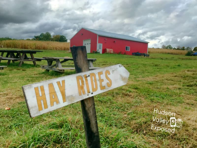 Hayrides and Corn Maze at Stuart's Fruit Farm