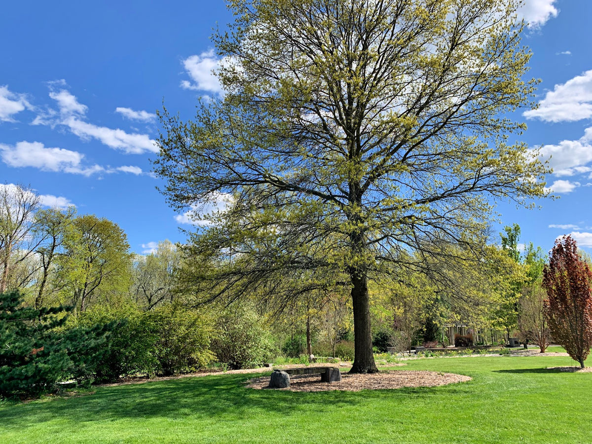 A majestic tree and bench at the Orange County Arboretum
