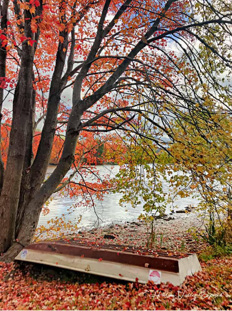Hudson Valley Fall Foliage by a lake in Carmel NY