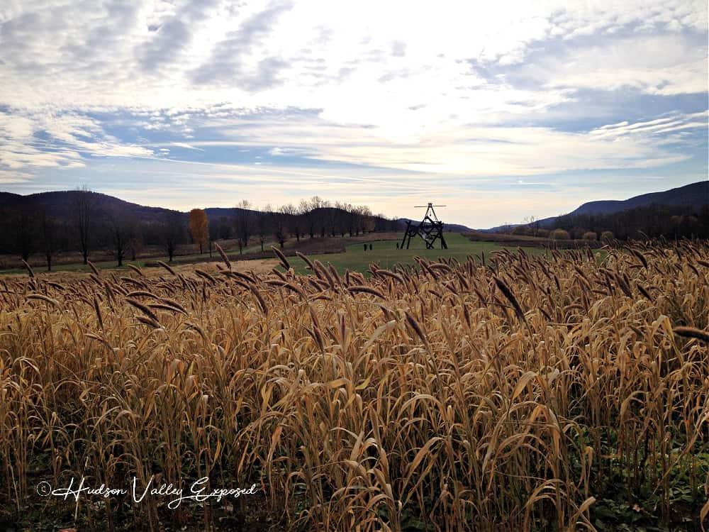 A field at Storm King Art Center