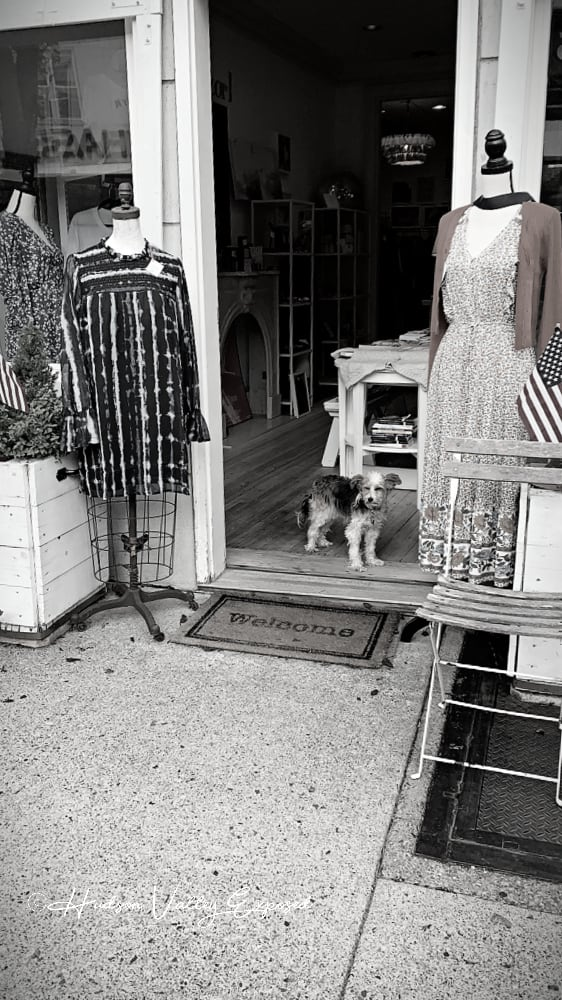 Dog at the doorway at a Hudson Valley shop