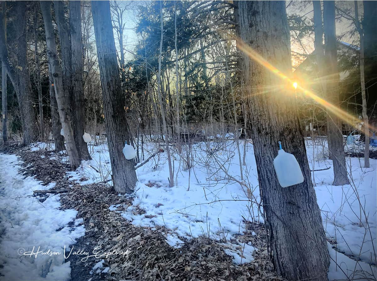 Sap collecting hudson valley winter activities