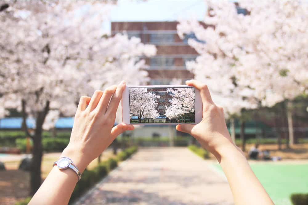 A person using their iPhone to take photos of cherry blossoms and a building. iPhoneography is the action of taking photos with your iPhone.