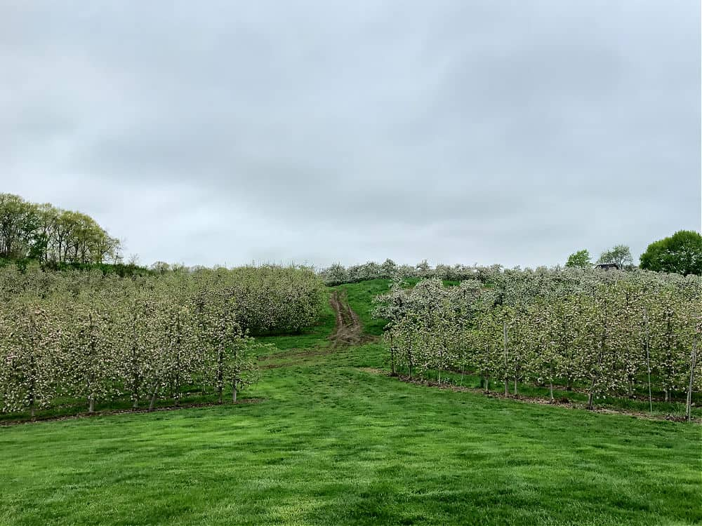 Hudson Valley Spring