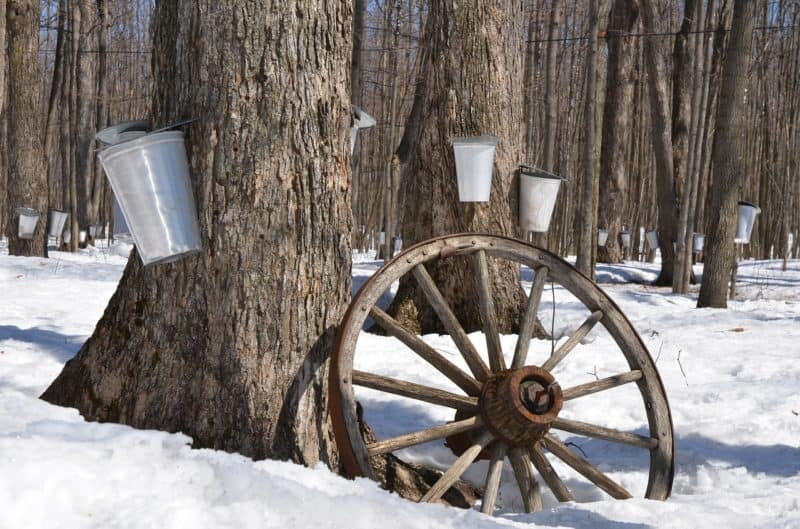 Tapping Maple Trees in the Hudson Valley is a fun activity to do during a Winter Weekend